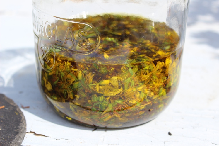 Wundöl (Johanniskrautöl, Rotö) selber herstellen